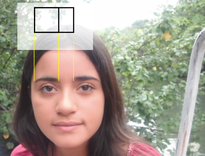 The Golden Ratio and Eyebrows